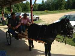 7 Yr Old Cart Pony broke to ride