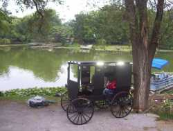 Hard to find Amish Buggy for sale-DEAL
