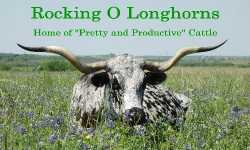 Rocking O Longhorns.jpg